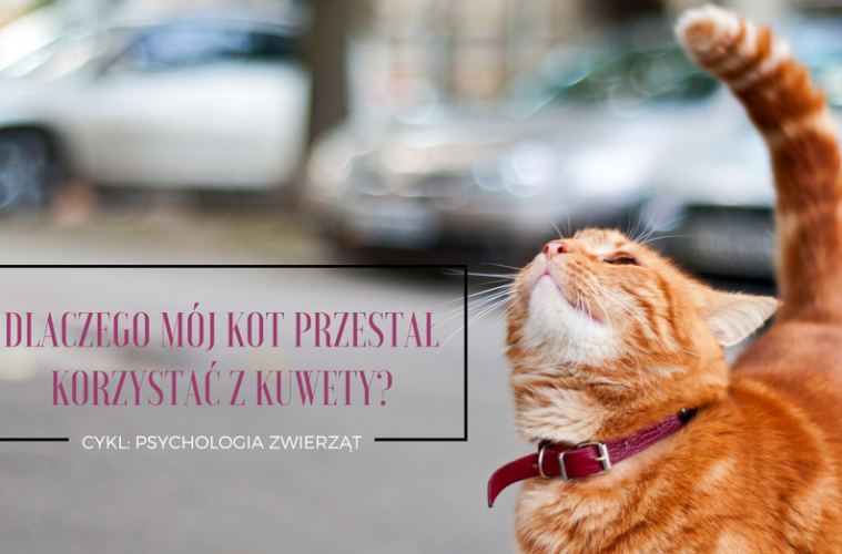 Dlaczego Mój Kot Przestał Korzystać Z Kuwety O Psychologii
